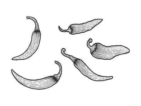 Peppers sketch engraving vector illustration. Scratch board style imitation. Hand drawn image.