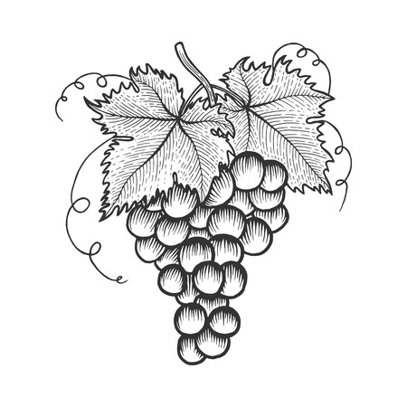 Bunch of grapes with leaves sketch engraving vector illustration. Scratch board style imitation. Hand drawn image. Stock fotó - 124017416