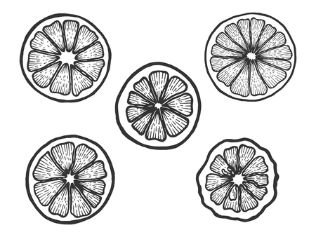 Citrus exotic fruits slice set sketch engraving vector illustration. Scratch board style imitation. Black and white hand drawn image. Foto de archivo - 124017417