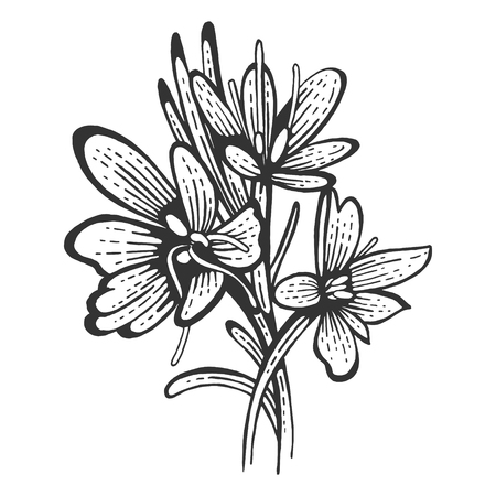 Saffron flower Crocus sativus spice sketch engraving vector illustration. Scratch board style imitation. Hand drawn image. Stock Illustratie