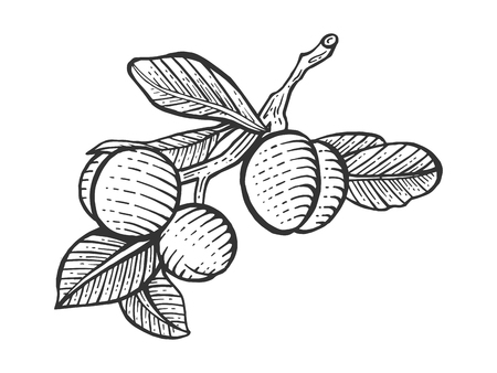 Plum fruit plant tree branch sketch engraving vector illustration. Scratch board style imitation. Hand drawn image.