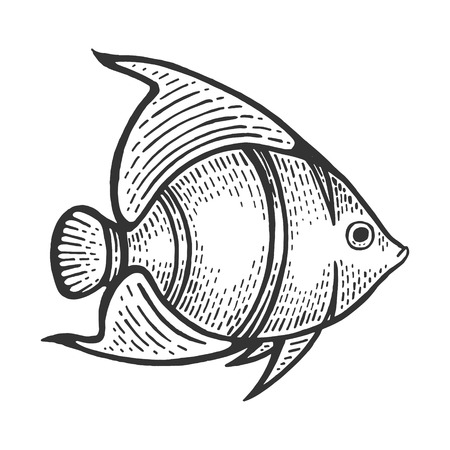 Angel fish animal sketch engraving vector illustration. Scratch board style imitation. Black and white hand drawn image. Illustration