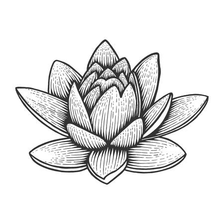 Nymphaea acqua loto giglio fiore vintage schizzo incisione illustrazione vettoriale. Imitazione di stile scratch board. Immagine disegnata a mano in bianco e nero.