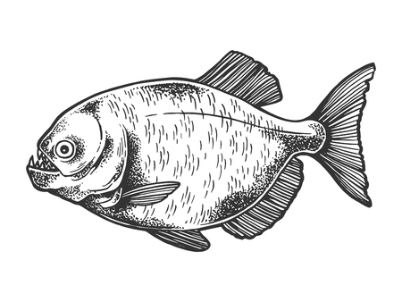 Piranha fish animal sketch engraving vector illustration. Scratch board style imitation. Black and white hand drawn image.
