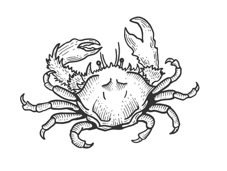 Crab sea animal sketch engraving vector illustration. Scratch board style imitation. Black and white hand drawn image.