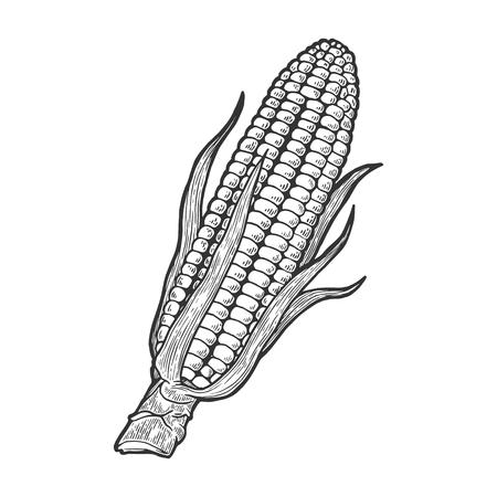 Mais mais pianta vegetale sul ramo schizzo incisione illustrazione vettoriale. Imitazione di stile scratch board. Immagine disegnata a mano.