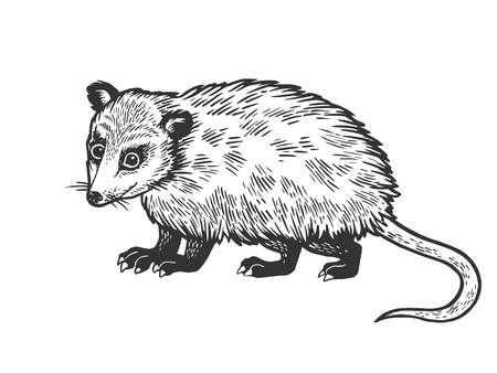 Opossum animal sketch engraving vector illustration. Scratch board style imitation. Black and white hand drawn image.