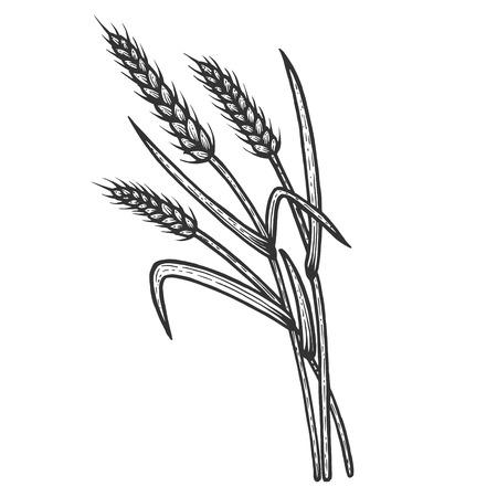 Weizenähre Ährchen Skizze Gravur Vektor-Illustration. Nachahmung im Scratchboard-Stil. Handgezeichnetes Schwarz-Weiß-Bild. Vektorgrafik