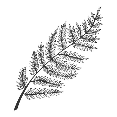 Fern herb plant sketch engraving vector illustration. Scratch board style imitation. Black and white hand drawn image.