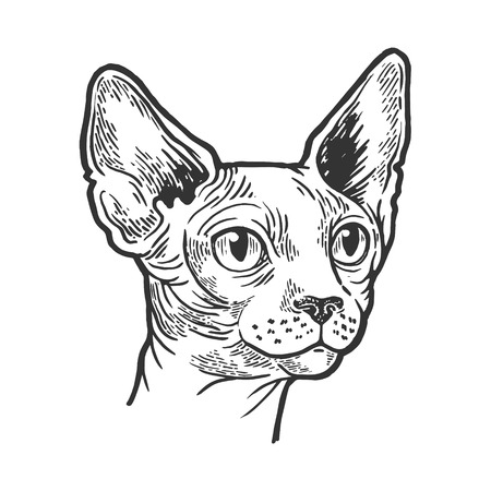 Sphynx cat animal head sketch engraving vector illustration. Scratch board style imitation. Black and white hand drawn image.