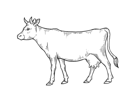 Cow rural farm animal sketch engraving vector illustration. Scratch board style imitation. Black and white hand drawn image. Stok Fotoğraf - 121652366