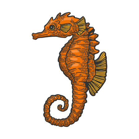 Sea horse animal color sketch engraving vector illustration. Scratch board style imitation. Black and white hand drawn image.