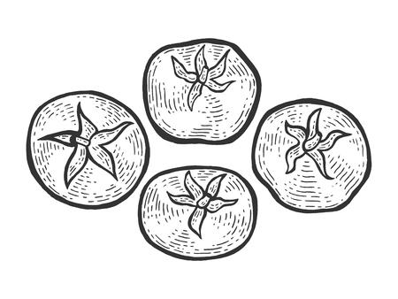 Tomato plant sketch engraving vector illustration. Scratch board style imitation. Hand drawn image. Illustration