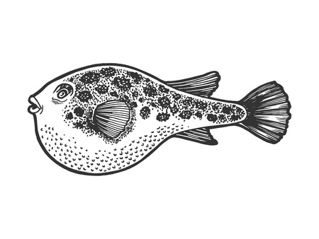 Fugu poisonous toxic fish animal sketch engraving vector illustration. Scratch board style imitation. Black and white hand drawn image. Ilustração