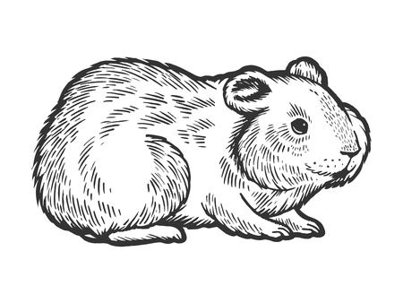 Chomik gryzoni zwierzę zwierzę szkic Grawerowanie ilustracji wektorowych. Imitacja stylu drapaka. Ręcznie rysowane obraz. Ilustracje wektorowe
