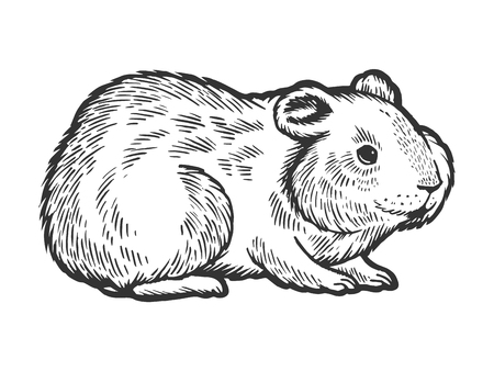 Hamster rodent pet animal sketch engraving vector illustration. Scratch board style imitation. Hand drawn image.