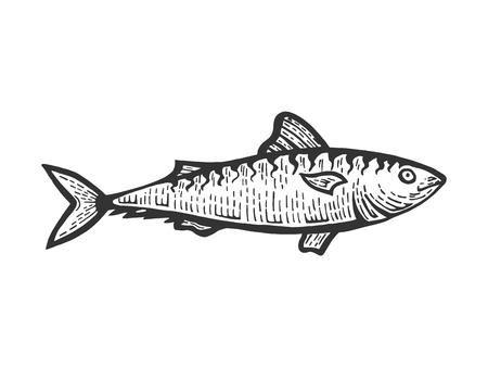 Aringa Clupea pesce cibo animale schizzo incisione illustrazione vettoriale. Imitazione di stile scratch board. Immagine disegnata a mano in bianco e nero.