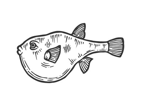 Fugu poisonous toxic fish animal sketch engraving vector illustration. Scratch board style imitation. Black and white hand drawn image. Illustration