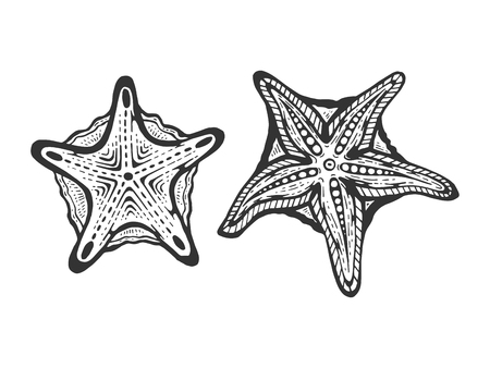 Starfish fish animal sketch engraving vector illustration. Scratch board style imitation. Black and white hand drawn image.