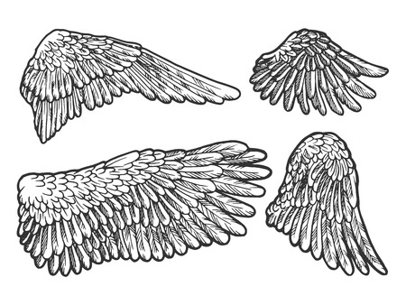 Bird angel wings set sketch engraving vector illustration. Scratch board style imitation. Black and white hand drawn image. Standard-Bild - 124033600