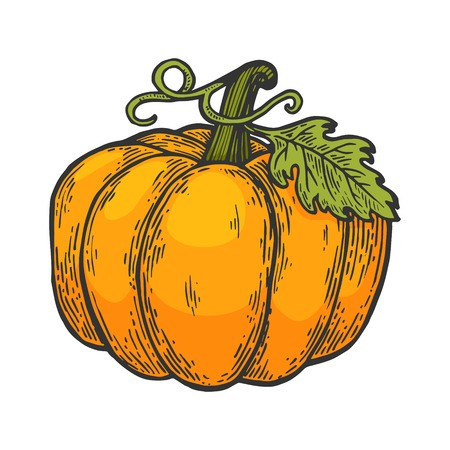 Pumpkin fruit color sketch engraving vector illustration. Scratch board style imitation. Black and white hand drawn image.