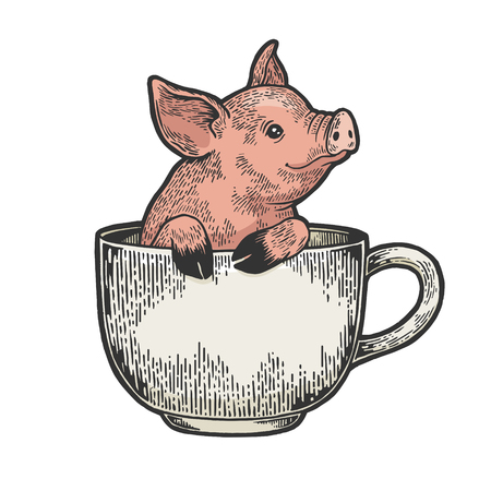 Little pig animal in coffee cup color sketch engraving vector illustration. Scratch board style imitation. Black and white hand drawn image. Ilustração
