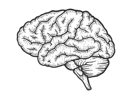 Human brain schematic vintage sketch engraving vector illustration. Scratch board style imitation. Black and white hand drawn image. Ilustração