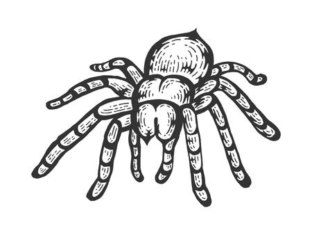 Tarantula Lycosa lobo araña dibujo arte lineal grabado ilustración vectorial. Imitación de tablero de rascar. Imagen dibujada a mano en blanco y negro.
