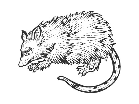 Opossum rat animal sketch engraving vector illustration. Scratch board style imitation. Black and white hand drawn image. Ilustração
