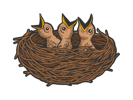 Nestling bird in nest color sketch line art engraving vector illustration. Scratch board style imitation. Black and white hand drawn image.