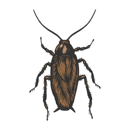 Kakerlake Bug Insekt Farbskizze Linie Kunst Gravur Vektor-Illustration. Nachahmung im Scratchboard-Stil. Handgezeichnetes Schwarz-Weiß-Bild.