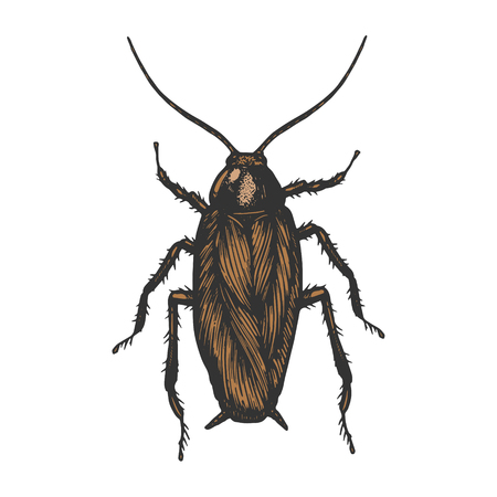 Cockroach bug insect color sketch line art engraving vector illustration. Scratch board style imitation. Black and white hand drawn image. Illustration
