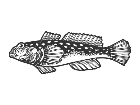 Goby fish animal sketch engraving vector illustration. Scratch board style imitation. Black and white hand drawn image. 向量圖像