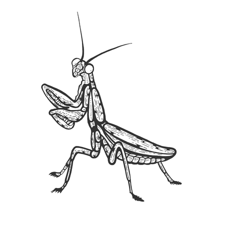 Mantis insect sketch line art engraving vector illustration. Scratch board style imitation. Black and white hand drawn image.