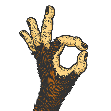 Monkey animal hand with ok gesture color sketch engraving vector illustration. Good sign. Scratch board style imitation. Hand drawn image.