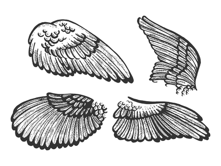 Bird angel wings set sketch engraving vector illustration. Scratch board style imitation. Black and white hand drawn image. Illustration