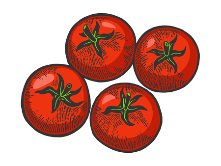 Tomato plant color sketch engraving vector illustration. Scratch board style imitation. Hand drawn image.