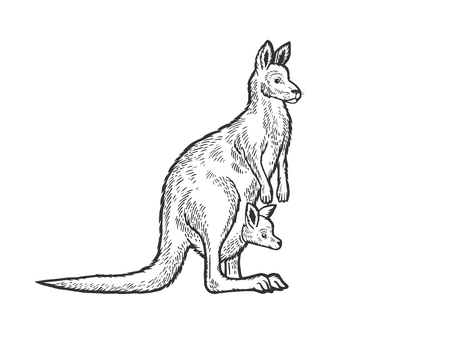Canguro con cucciolo di bambino in sacchetto di canguro animale schizzo incisione illustrazione vettoriale Imitazione di stile scratch board. Immagine disegnata a mano in bianco e nero.