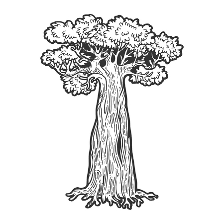 Baobab monkey bread tree sketch engraving vector illustration. Scratch board style imitation. Hand drawn image.