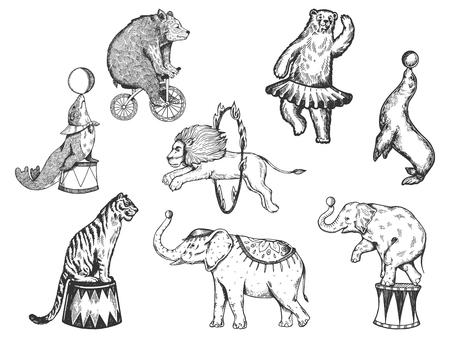 Retro circus dieren prestaties set r schets vectorillustratie. Oude hand getekende gravure imitatie. Vintage tekeningen van mens en dier
