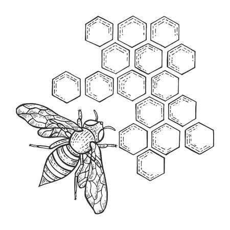 Miel de abeja y panal insecto animal dibujo grabado ilustración vectorial. Imitación de tablero de rascar. Imagen dibujada a mano en blanco y negro. Ilustración de vector
