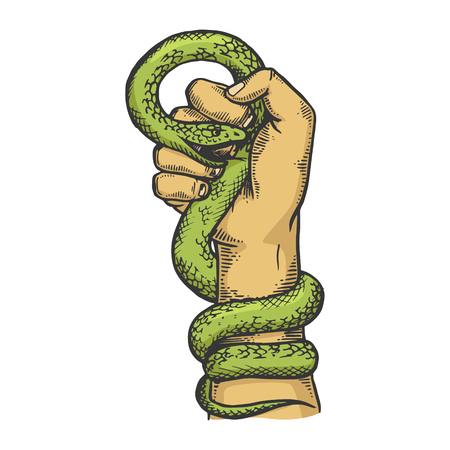 Snake clenched in hand fist color sketch engraving vector illustration. Scratch board style imitation. Black and white hand drawn image. Çizim