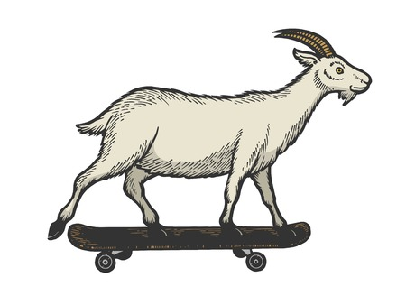 Domestic goat ride on skateboard sketch engraving vector illustration. Scratch board style imitation. Black and white hand drawn image.