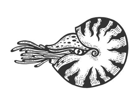 Nautilus sea Caridea animal sketch engraving vector illustration. Scratch board style imitation. Black and white hand drawn image.