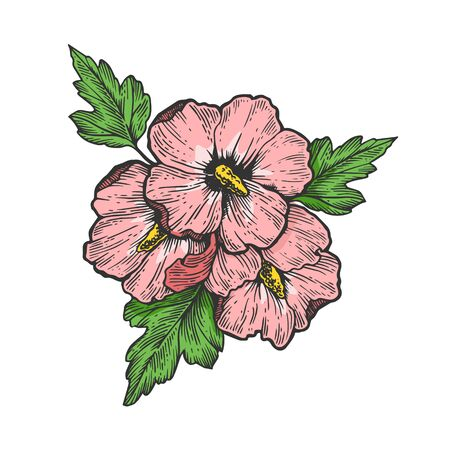 Hibiscus petunia viola flower plant color sketch engraving vector illustration. Scratch board style imitation. Black and white hand drawn image. Illustration