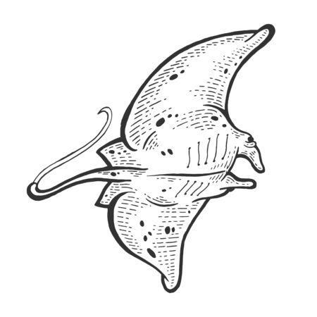 Batoidea stingray sea animal sketch engraving vector illustration. Scratch board style imitation. Black and white hand drawn image.