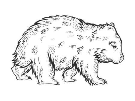 Wombat animal sketch engraving vector illustration. Scratch board style imitation. Black and white hand drawn image.