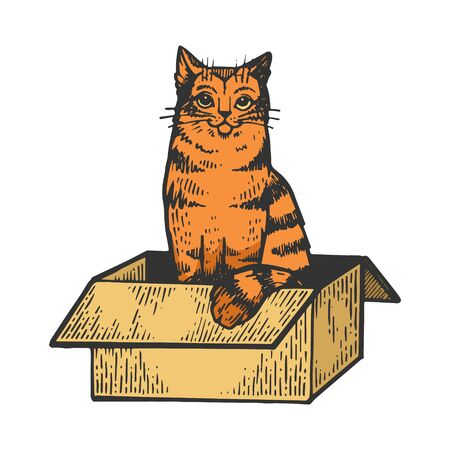 Cat sitting in box color sketch engraving vector illustration. Scratch board style imitation. Black and white hand drawn image. 向量圖像