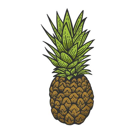 Pineapple exotic fruit color sketch engraving vector illustration. Scratch board style imitation. Black and white hand drawn image.