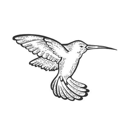 Colibri animal croquis illustration vectorielle de gravure. Imitation de style planche à gratter. Image dessinée à la main.